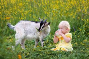 Козье молоко и его свойства