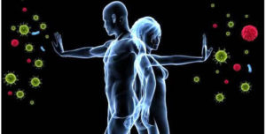 Корица — польза и вред для организма
