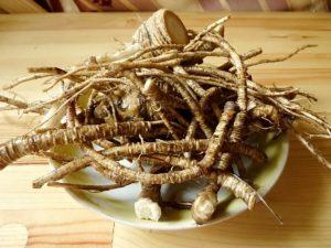 Лечебные свойства корней: польза и вред, противопоказания