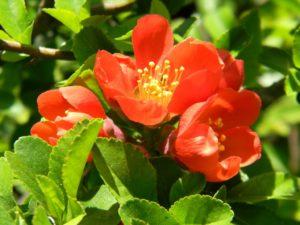 Полезные растения, применяемые в народной медицине