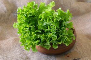 Полезные свойства салата: противопоказания, польза и вред