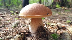 Топ-10 самых полезных грибов