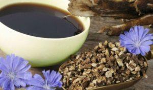 Цикорий: полезные свойства, противопоказания, польза и вред