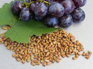 Виноградная косточка: полезные свойства, противопоказания, польза и вред