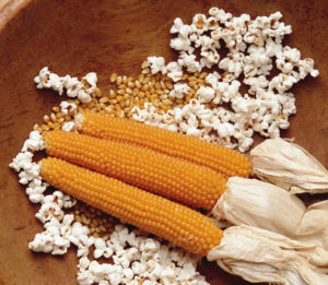 Выбор кукурузы