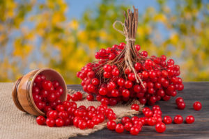Калина ягода: полезные свойства, противопоказания, польза и вред