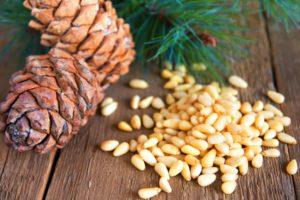 Кедровые орешки: полезные свойства, противопоказания, польза и вред