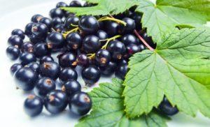 Лист смородины: полезные свойства, противопоказания, польза и вред