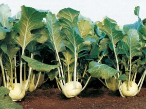 Нюансы выращивания рассады из семян