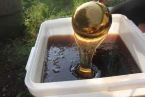 Особенности хранения гречишного меда