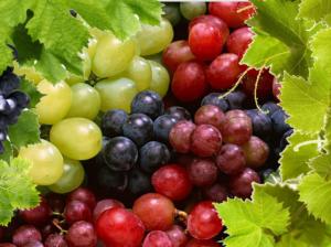Полезные свойства винограда: противопоказания, польза и вред