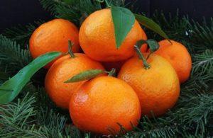 Полезные свойства мандарина: противопоказания, польза и вред