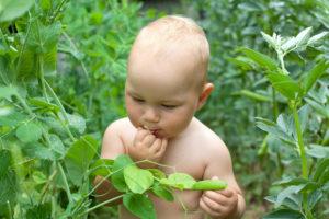 Польза гороха для детей