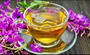 Польза и вред Иван чая для здоровья