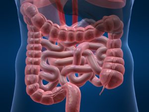 Польза сливы для кишечника