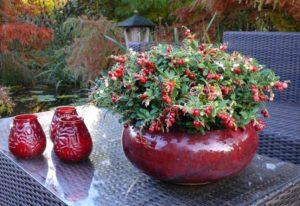 Посадка растения: состав почвы и особые условия