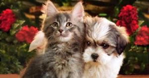 Применение вветеринарии