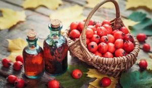 Сбор и заготовка цветов и плодов боярышника