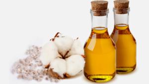 Хлопковое масло: полезные свойства, противопоказания, польза и вред