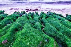 Хлорелла: полезные свойства, противопоказания, польза и вред