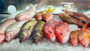 Из чего делают рыбий жир?