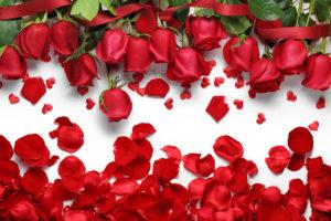 Лепестки розы: полезные свойства, противопоказания, польза и вред
