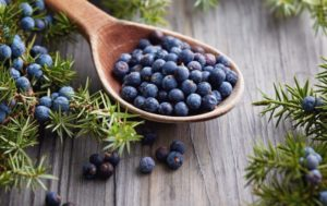 Плоды можжевельника: полезные свойства, противопоказания, польза и вред