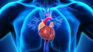 Снижает риск сердечно сосудистых заболеваний