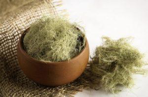 Уснея: полезные свойства, противопоказания, польза и вред