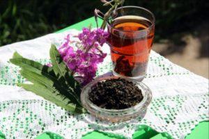 Саган дайля - полезные свойтсва и противопоказания